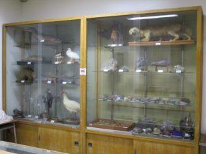 教材展示室の生物標本